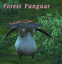 forest_funguar